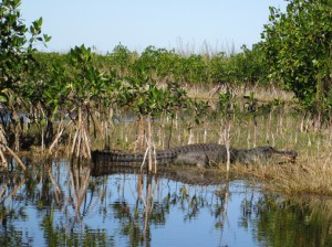 7n na odzi wypatrujemy krokodyli