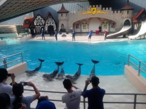16 marinarium pokaz delfinw i innych zwierzt