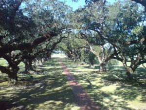 15a laura plantation