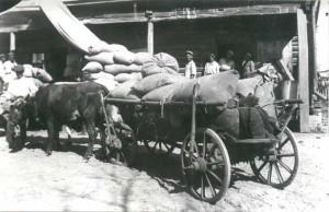 chlopi kaharyk kijowszczyzna dostrczaj zboe 1932